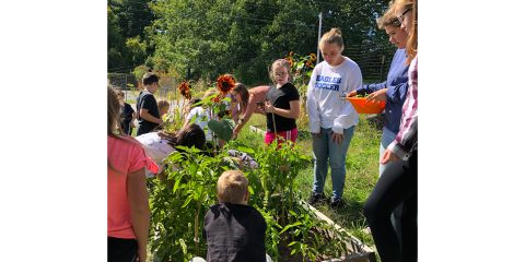 Greenhouse club and Mrs. Forney's 4th graders pick 50 lbs of veggies!