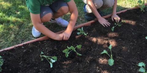 Back to School Seedlings